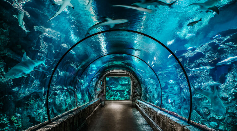 Las Vegas Family Vacation wouldn't be complete without one of the largest aquariums in North America at Mandalay Bay on the Strip