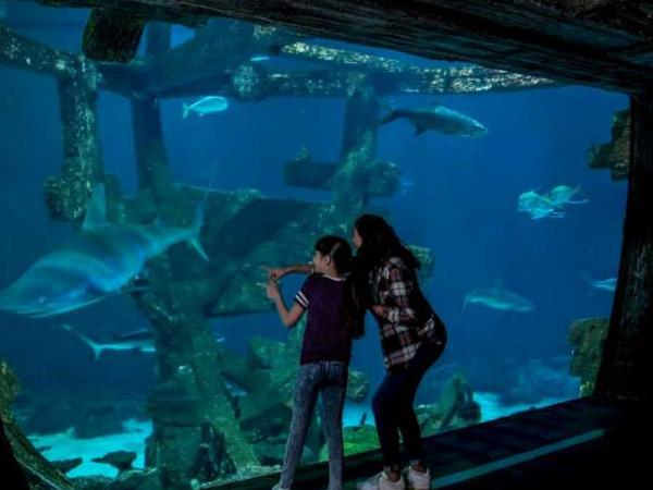 las-vegas-carousel-offers-shark-reef-04